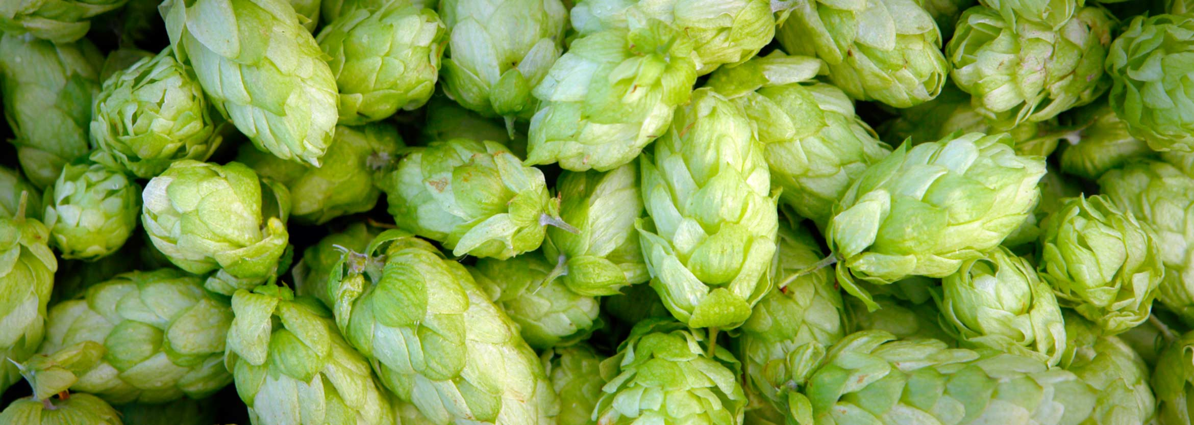 visit_subcategory_images_breweries
