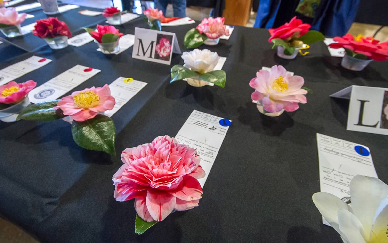 Table of awarded camellia flowers