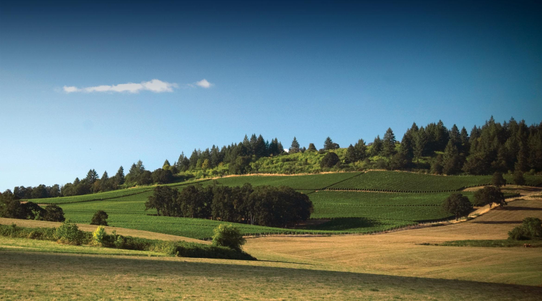 Overlooking Willamette Valley Vineyard in Summer