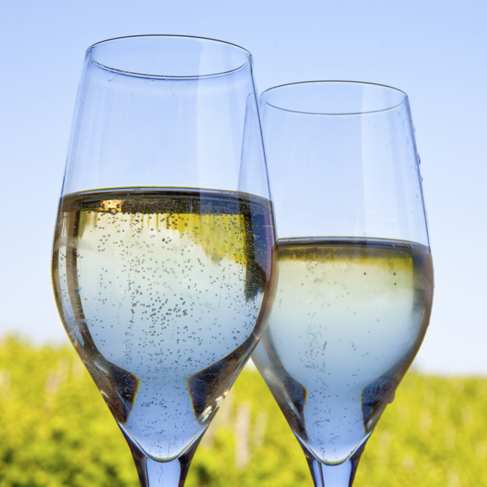 Two Glasses of Sparkling Wine in a Willamette Valley Vineyard